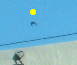 UFO at 200% enlargement showing effect of cloaking device