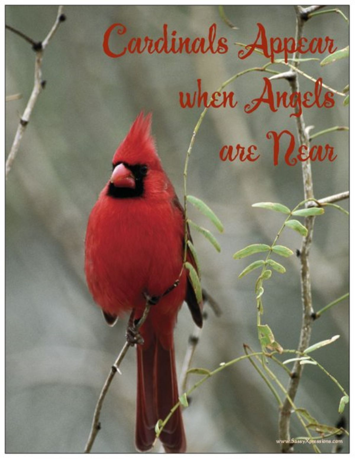 Cardinals Appear when Angels are Near Refrigerator Magnet