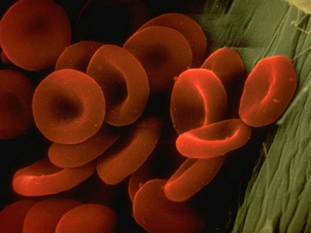 The Red Game Red_blood_cells