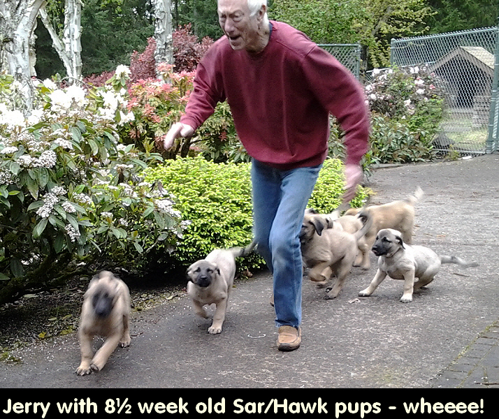 8½ wk old pups