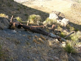 B-36 main gear in crash area