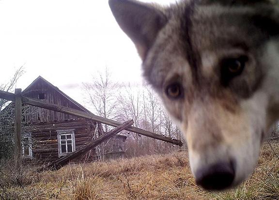 �Wolf