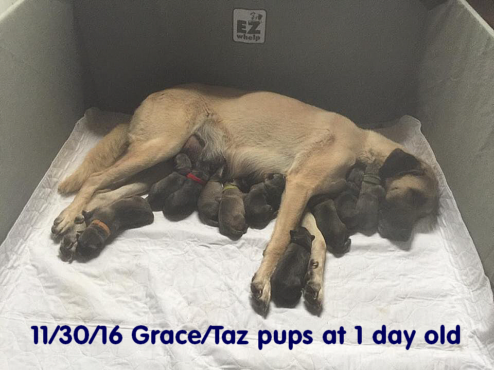 1 day old Pups