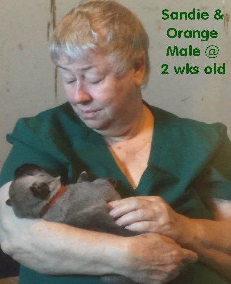 Sandie & Orange collar pup at 2 weeks old