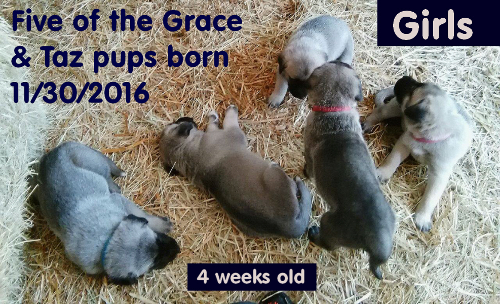 Pups at 4 weeks old