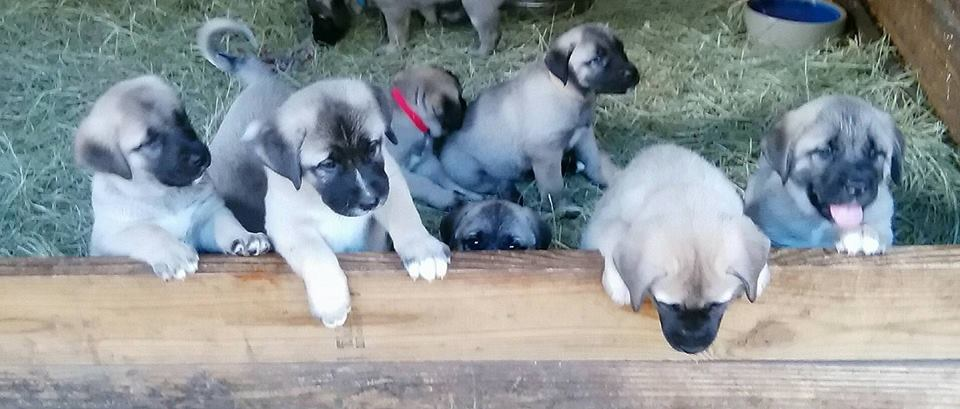 Pups at 7 weeks old