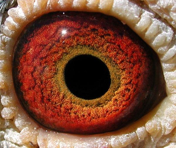Eye iris types http www angelfire com ga huntleyloft eye html
