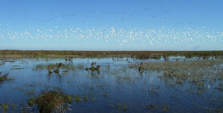 Shallow Florida lakes complimented by flocks of migratory waterfowl