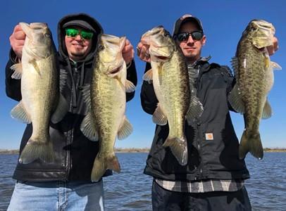 Florida bass.