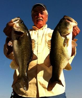 Florida Strain Bass