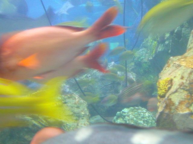 Tokyo's Aquarium in the Clouds
