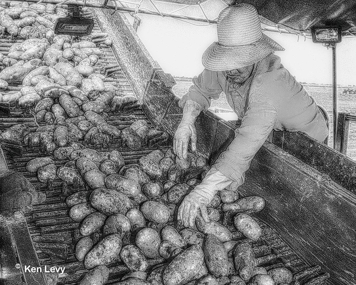 Migrant Farmworker