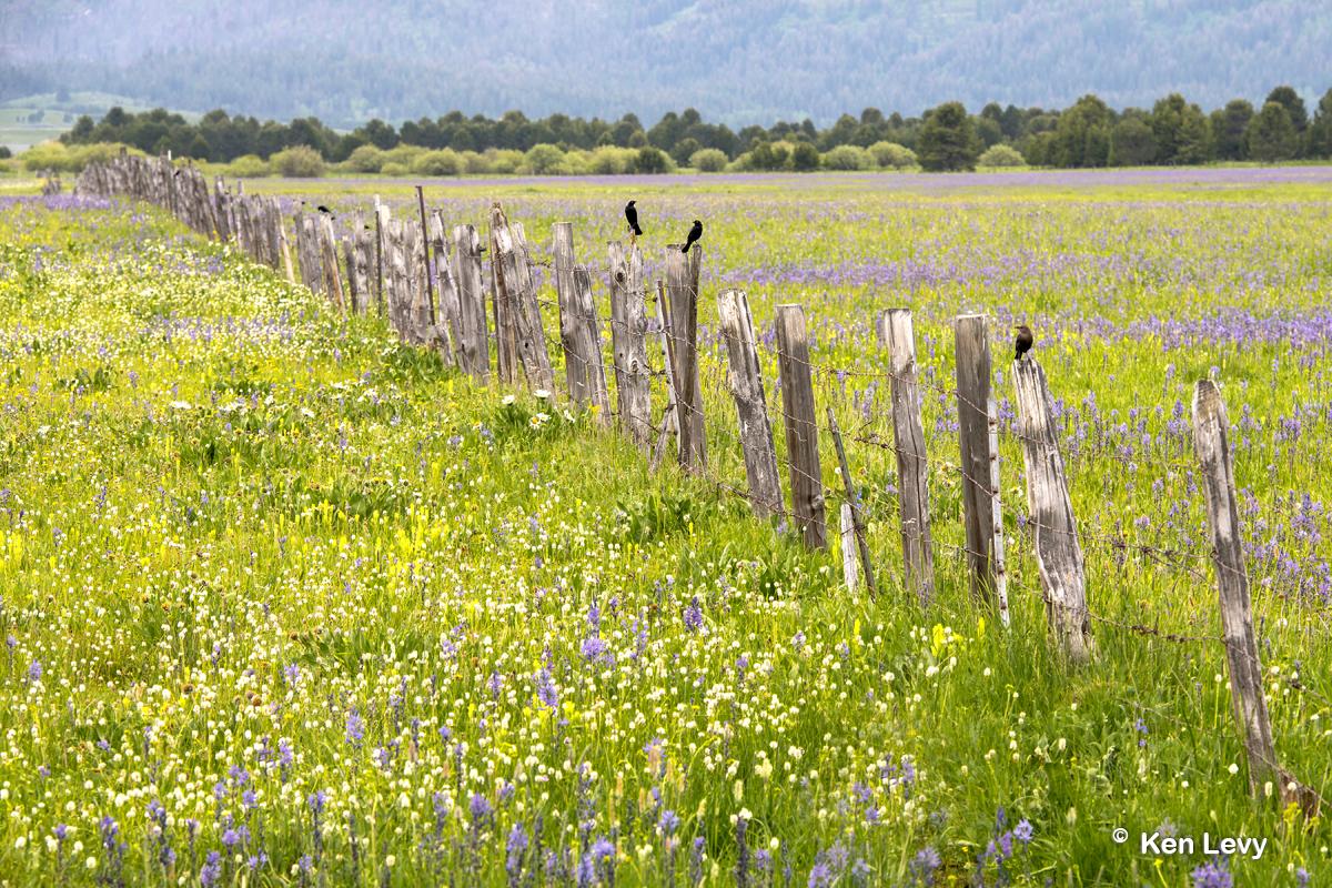 Flowers fence birds