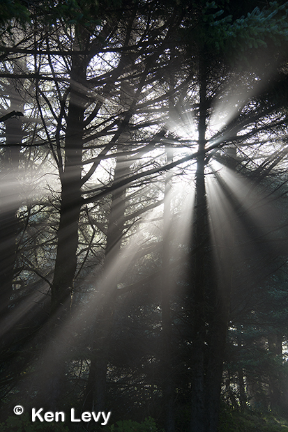 Foggy trees photograph