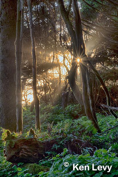 Sunset Forest Kalaloch