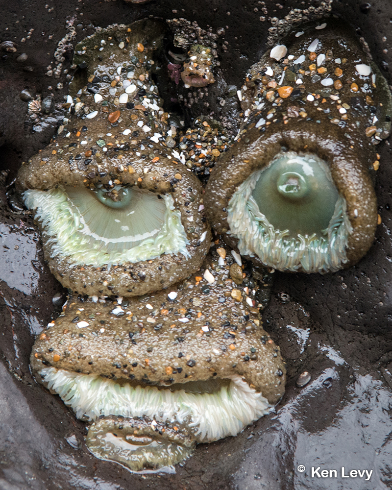 Sea Anemone faces