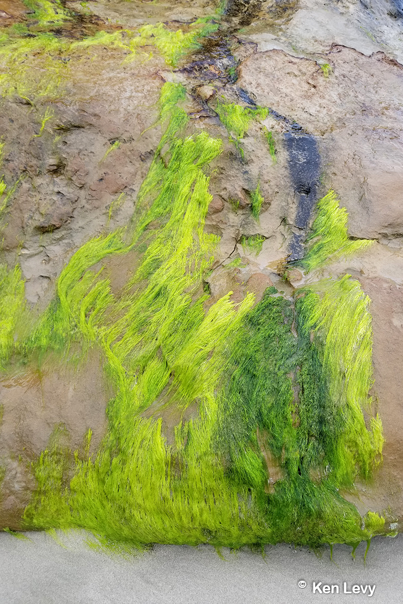 �Seaweed