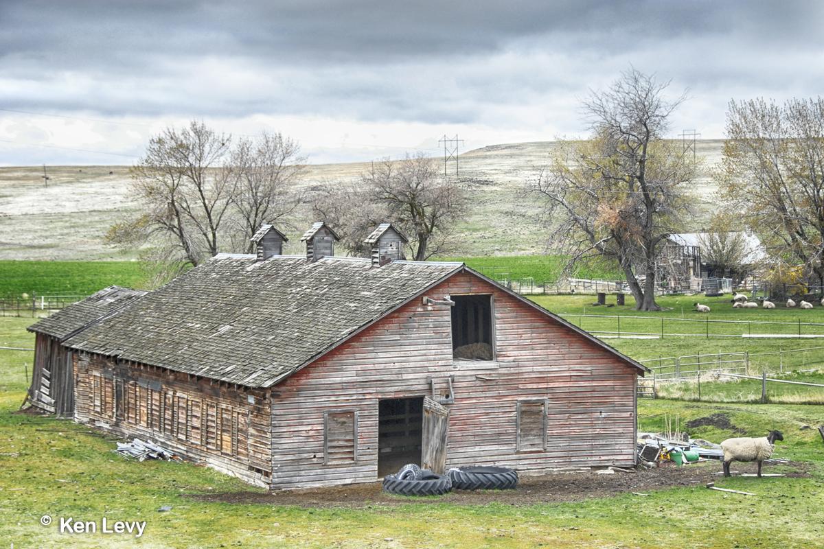 Barn sheep ranch
