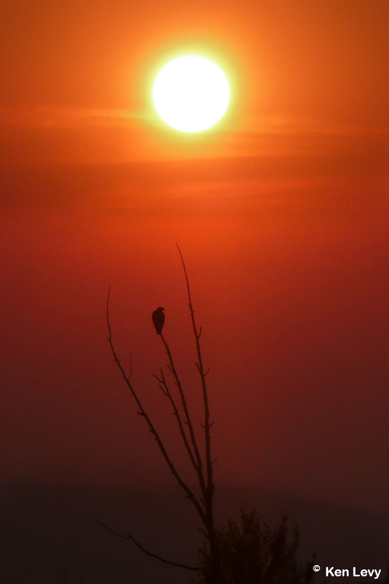 �Sunset
