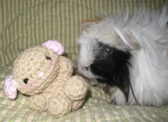 Tutorial on How to Crochet an Amigurumi Baby Guinea Pig - YouTube | 392x540