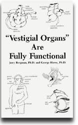 vestigial organ in man