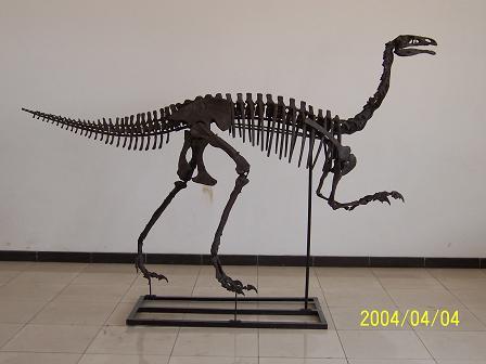 272c19c8db27 Dinosaur casts Dinosaur replicas Taylor Made Fossils Dinosaurs casts  replicas skulls skeletons museum exhibits displays TaylorMadeFossils.com  dinosaur ...