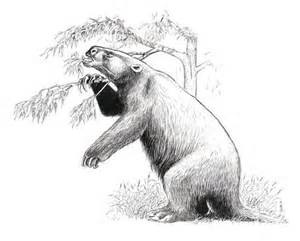 catonyx is an extinct genus of actively mobile ground sloth of the family mylodontidae endemic to south america during the late pleistocene epochs