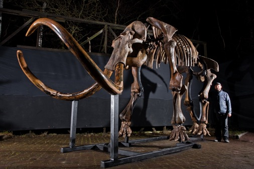 an overview of woolly mammoths remains Mammuthus primigenius - the woolly mammoth  america, parts of mexico, and  europe, with the remains of a baby mammoth found in siberia (haynes 1991.