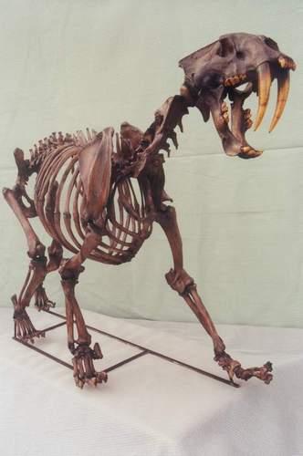 List of State Fossils - FossilEra.com