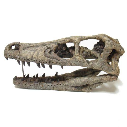 TaylorMadeFossils.com