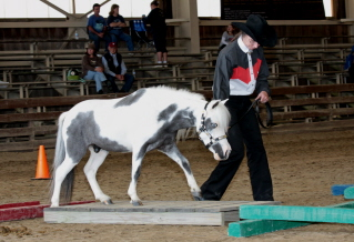 Gray and white pinto horse