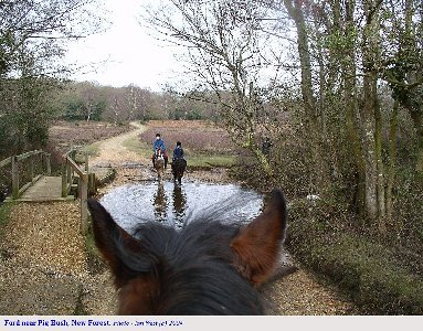 Riding through the ford near Pig Bush, New Forest