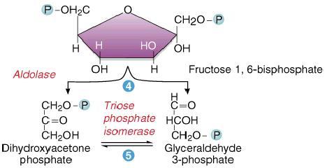 Biological Chemistry Topics