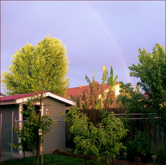 Beautiful Rainbows BackR