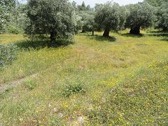 Corfu, Kerkyra