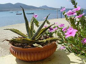 Despotiko Restaurant, Agios Georgios in Antiparos