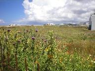 Bloemen op Antiparos