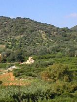The green valley with the orange groves and other fruit trees that surrounds Fodele, in the distance the Byzantine Panagia church