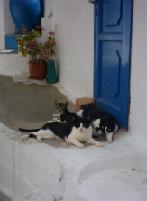 Lucky cats in Ano Syros
