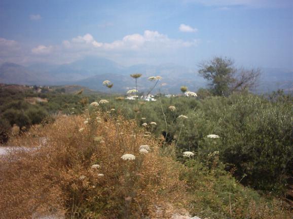 The nature around Kato Poulia