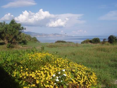 Kavos Psarou Studios Apartments - in Psarou Beach Zante Island - Zakynthos Greece