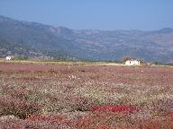 Plain near Skala Kalonis