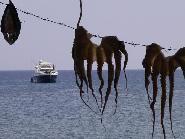 Lesbos, drying octopus in Skale Eressos