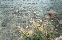The flowers at the edge of Megali Amos Beach.