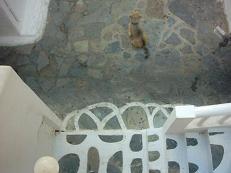 Hondje in Mykonos stad