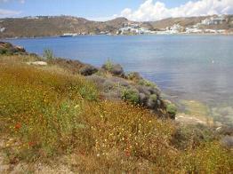 The surroundings of Agia Anna Beach