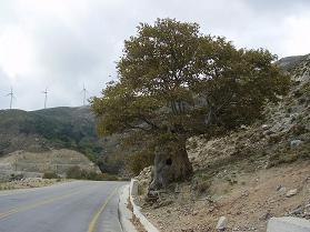 Nea Roumata, Kreta