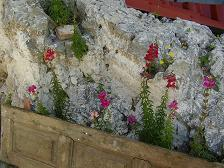 Samos landscape, Pirgos flowers
