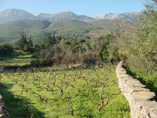 De prachtige omgeving van Georgioupoli.