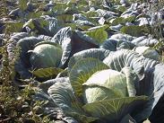 Farm in Agia Pelagia